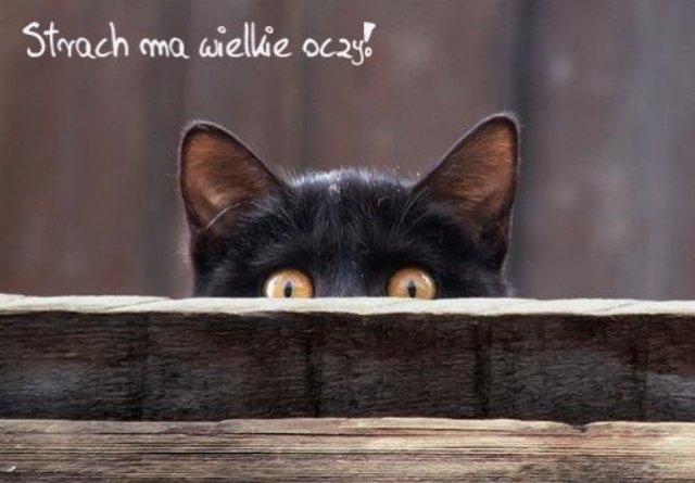 strach_ma_wielkie_oczy_2