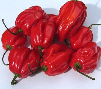 habanero_pepper