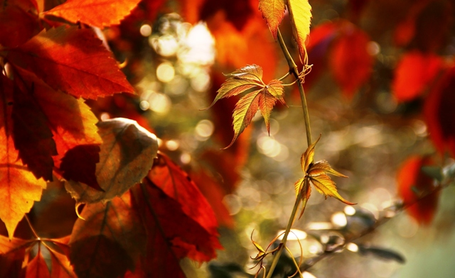 jesień1